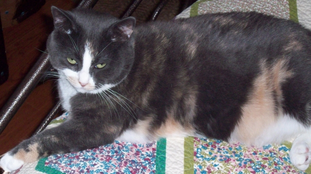 My cat, Tabby.